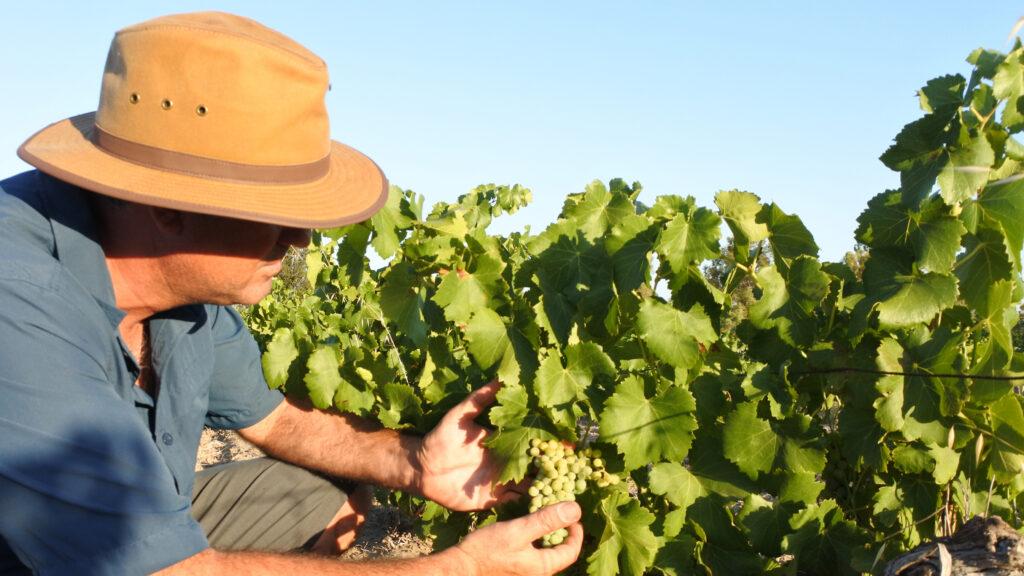 vini australiani decantico corsi sommelier online
